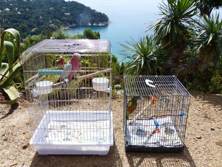 Cages transport Youyou Doudou.JPG