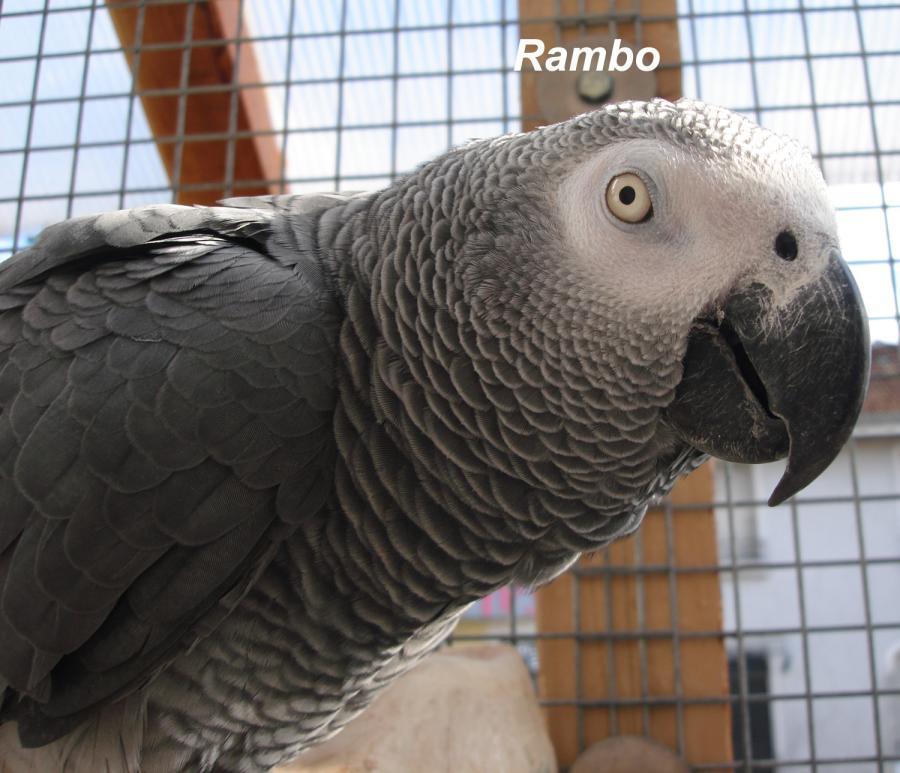 rambo-1.jpg