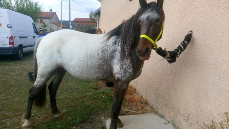 cheval.jpg