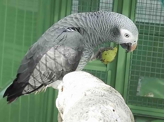 gris 3.jpg