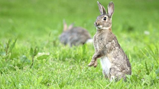 le-terrier-de-jeannot-lapin-examine-au-tribunal.jpg