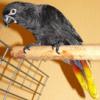 Cléo la coco qui chante - dernier message par alexis-grenoble