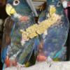 cohabitation de 2 femelles toui céleste EAM  - dernier message par Shuang