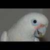Vermifuge  pour perruches - dernier message par lulu