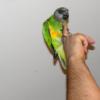 Coco mon youyou - dernier message par minivogel