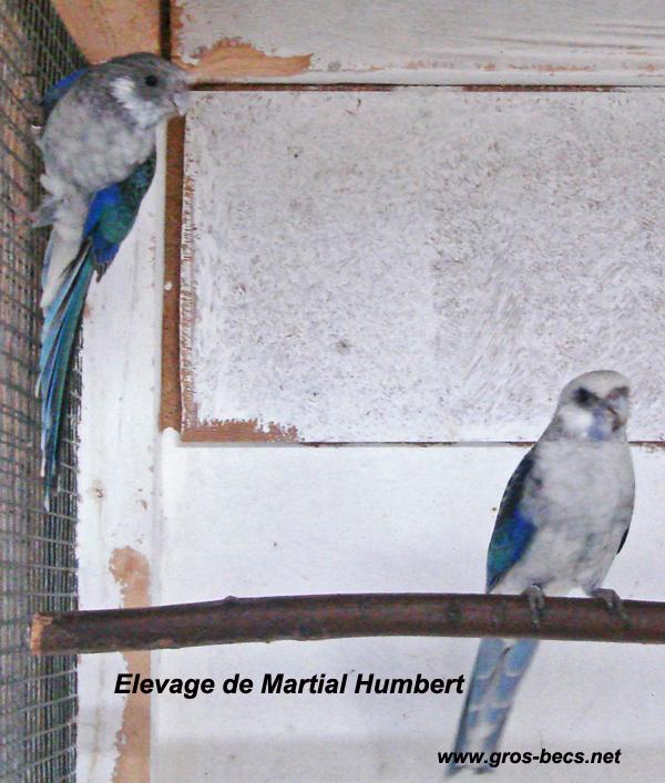 elevage-3.jpg