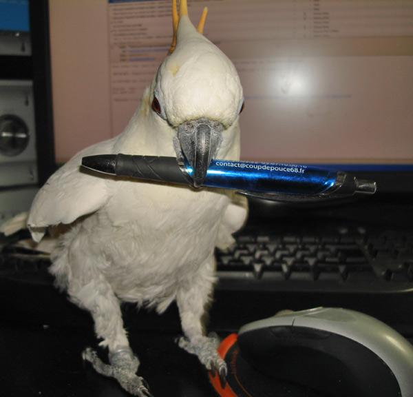 plume-stylo-1.jpg