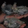 Urgent: oisillon constipé - dernier message par anne sophiem